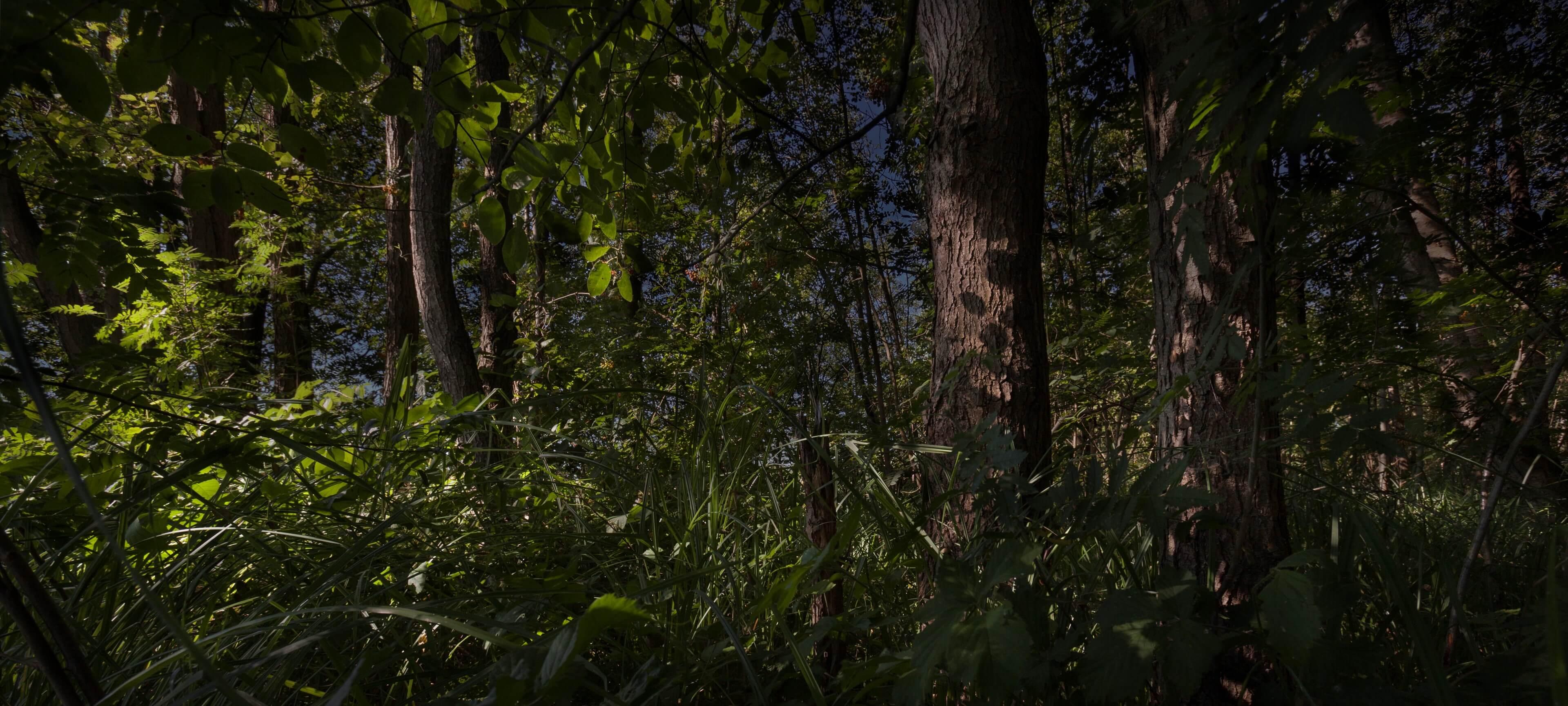 Jur Jurjen Poeles Fotografie Giethoorn natuur dageraad Kop van Overijssel vrij werk vrijwerk kunst kunstfotografie
