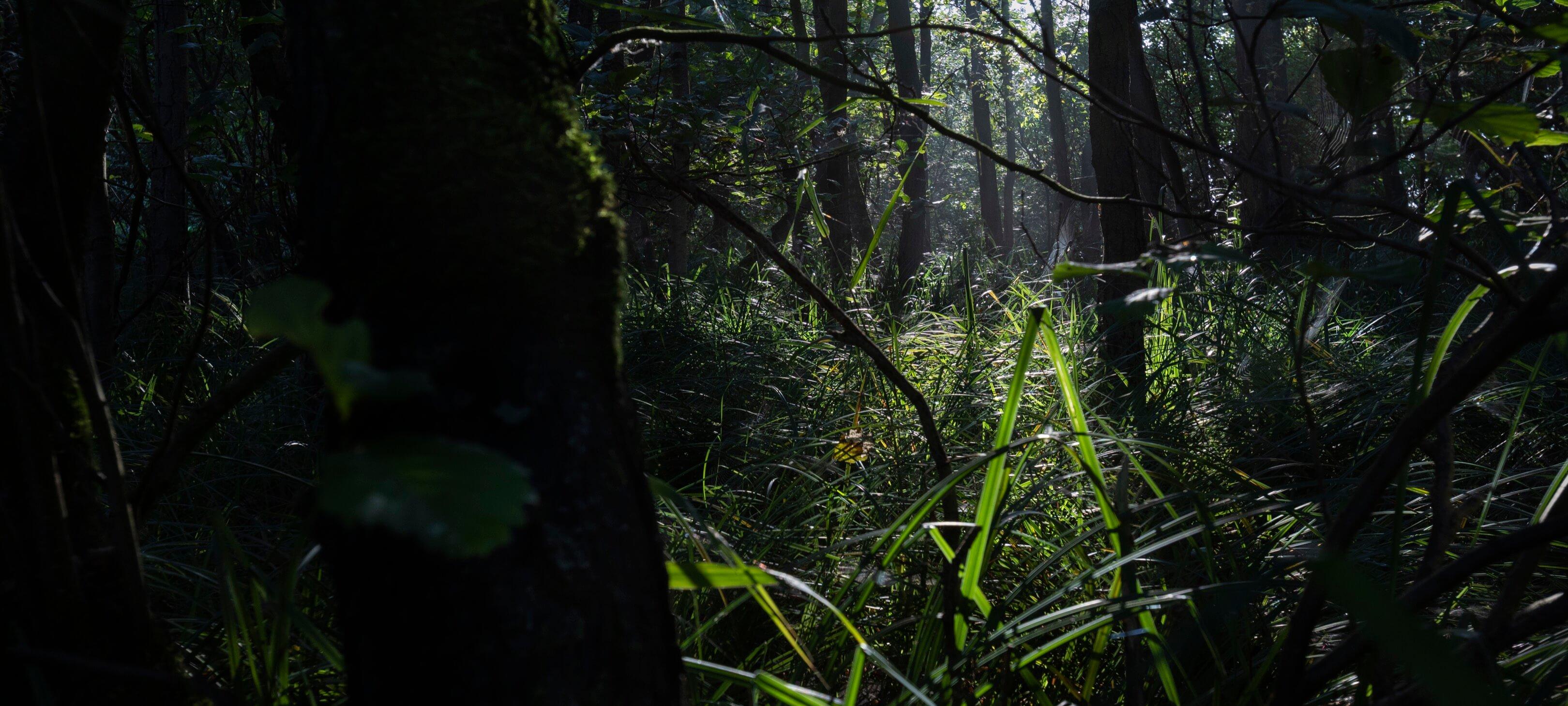 Jur Jurjen Poeles fotografie landschap dageraad natuurwater moeras kunst kunstfotografie