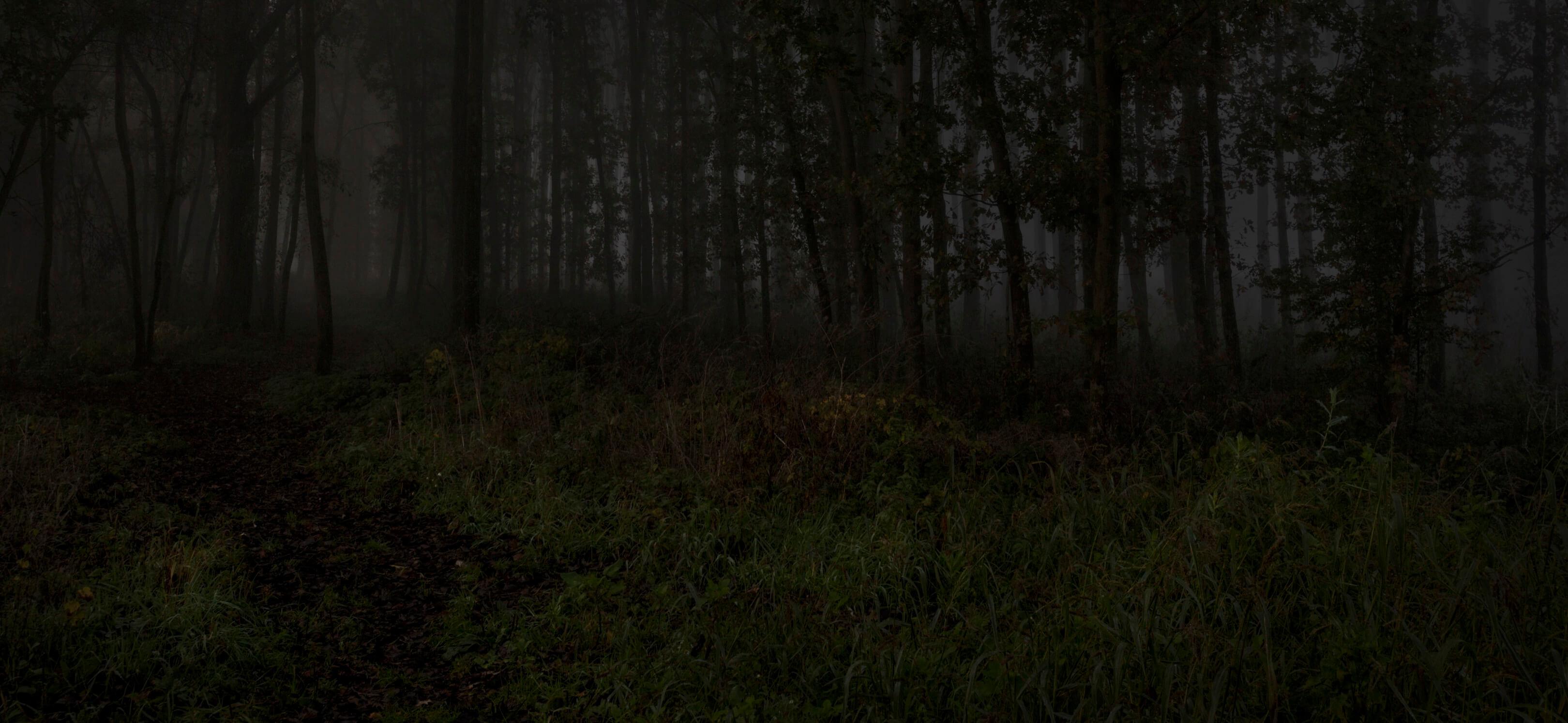 Jur Jurjen Poeles fotografie fragment landschap from dusk till dawn duister ochtendgloren dageraad vrijwerk vrij werk kunst kunstfotografie mistig bos