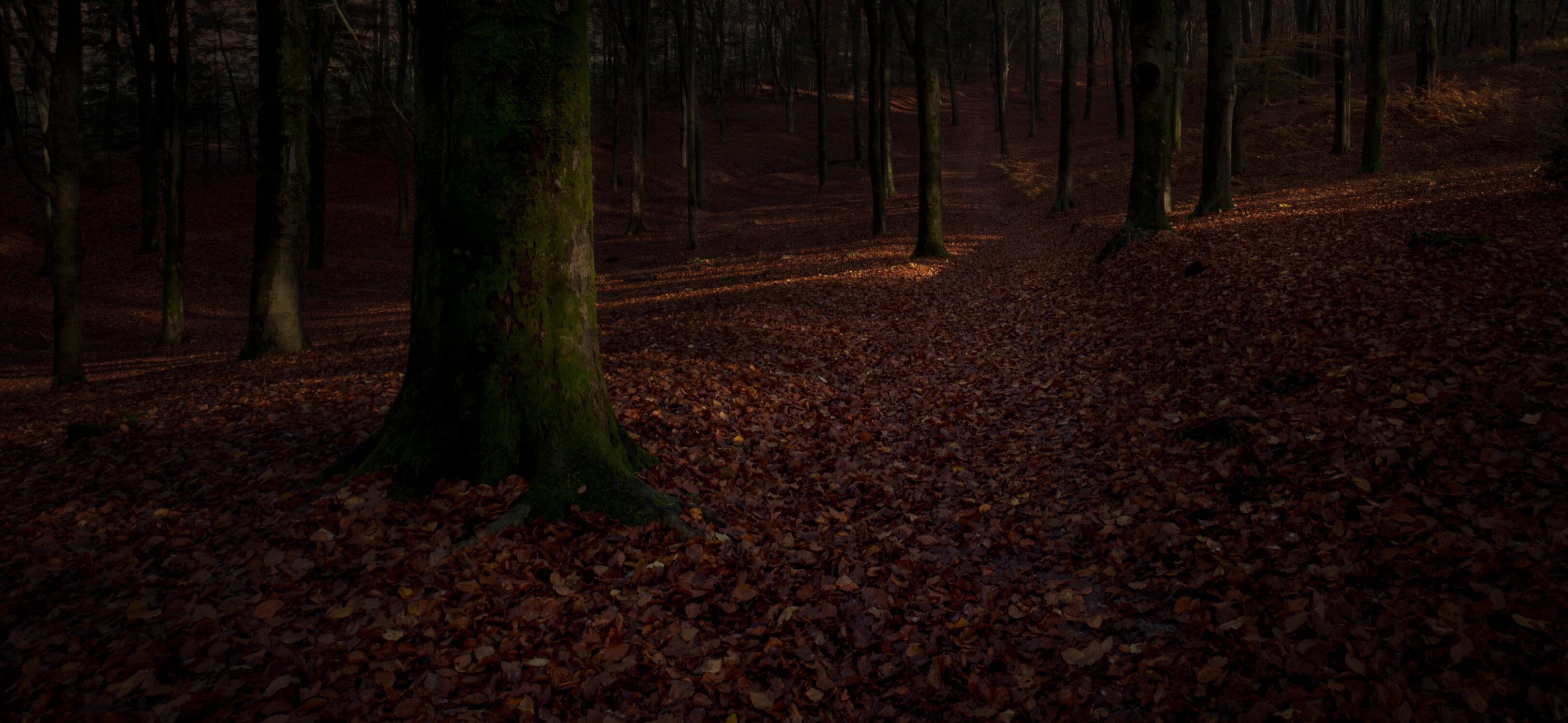 Jur Jurjen Poeles fotografie fragment landschap from dusk till dawn duister ochtendgloren dageraad vrijwerk vrij werk kunst kunstfotografie bos bospad