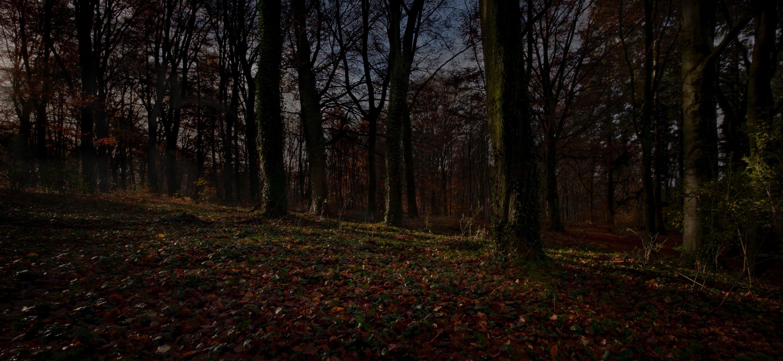 Jur Jurjen Poeles fotografie fragment landschap from dusk till dawn duister ochtendgloren dageraad vrijwerk vrij werk kunst kunstfotografie bos beuken