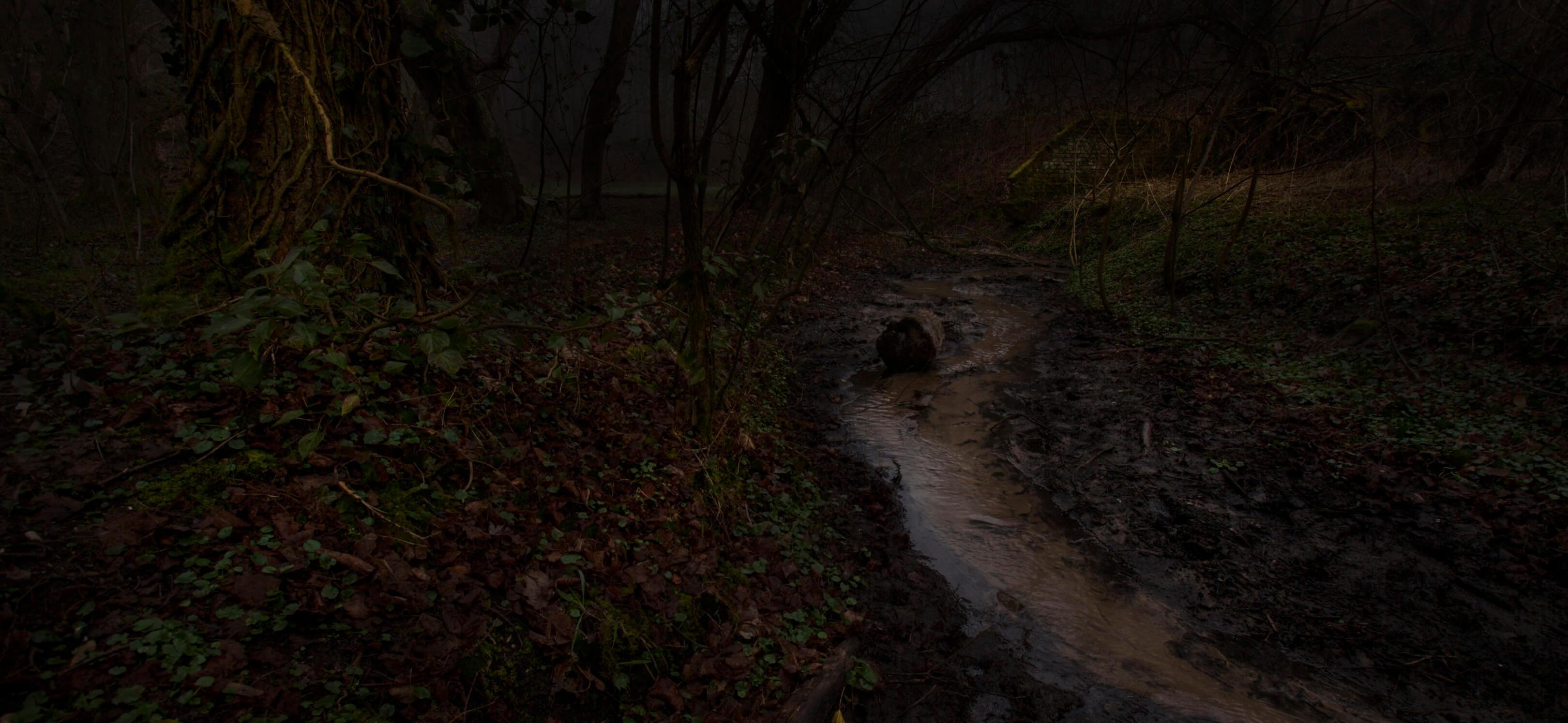 Jur Jurjen Poeles fotografie fragment landschap from dusk till dawn duister ochtendgloren dageraad vrijwerk vrij werk kunst kunstfotografie beek bos