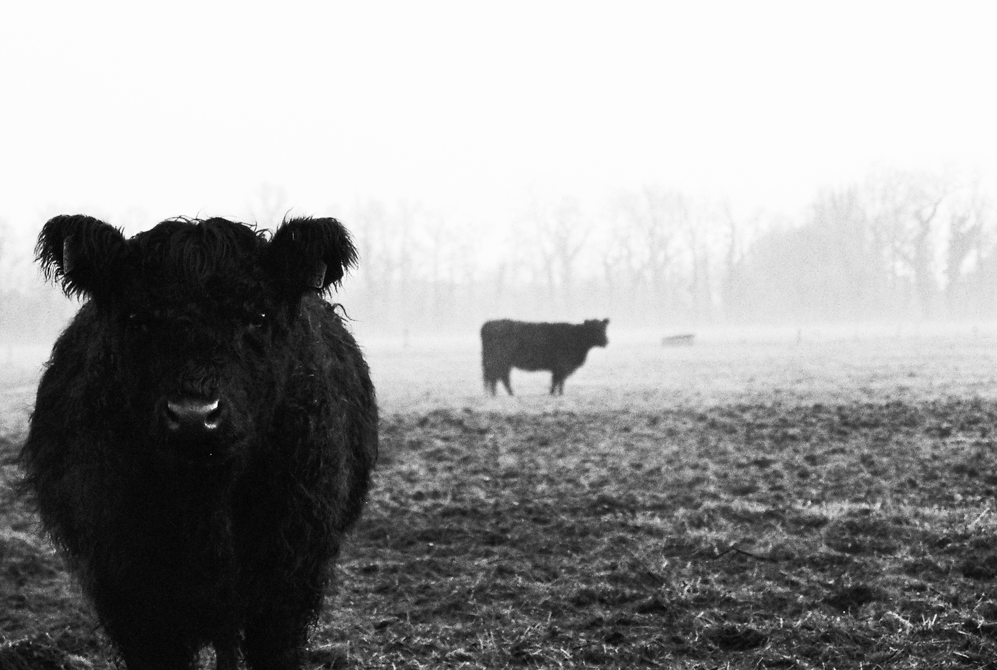 Jurjen Poeles Fotografie Jur zwart/wit zwart wit het lage land 't lage land wiede weide Giethoorn kunst kunstfotografie