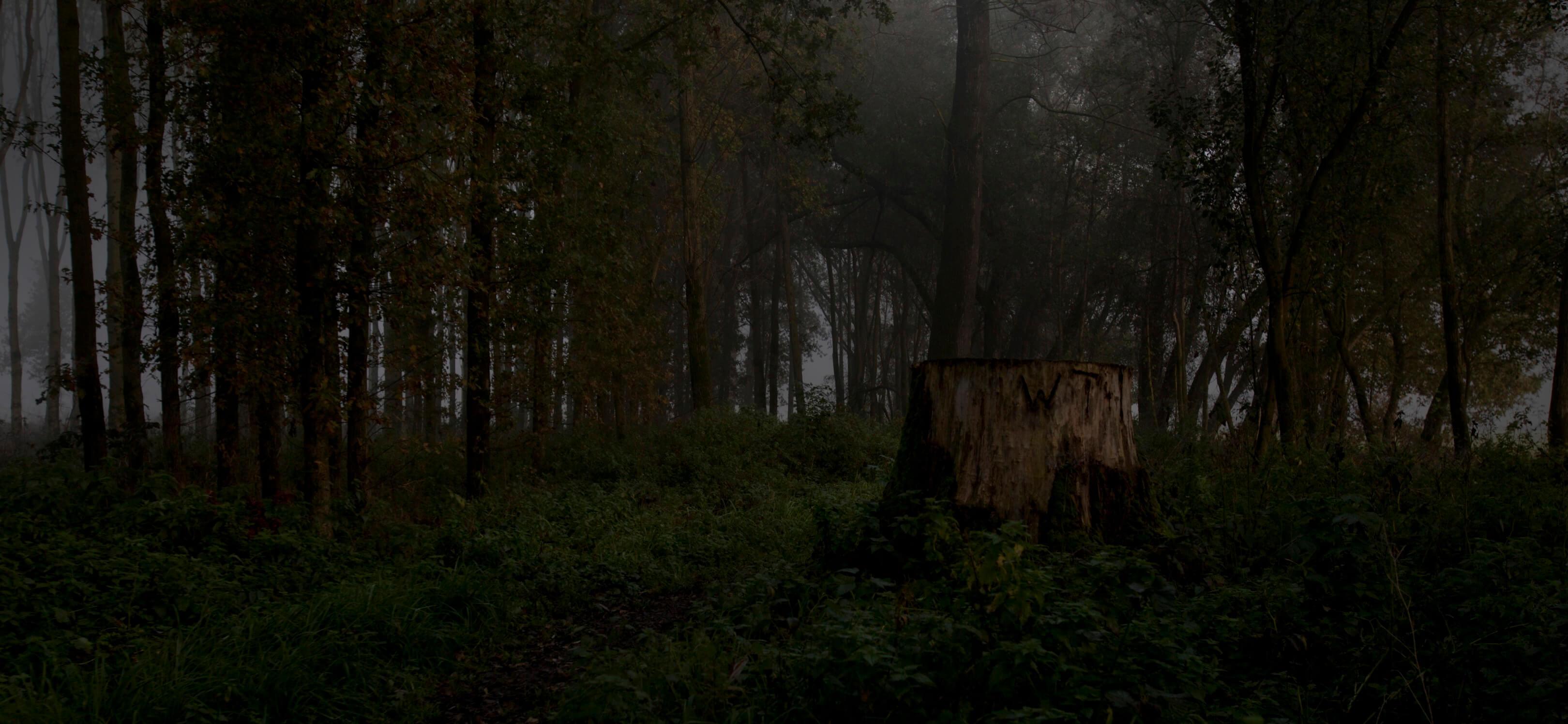 Jur Jurjen Poeles fotografie fragment landschap from dusk till dawn duister ochtendgloren dageraad vrijwerk vrij werk kunst kunstfotografie boomstronk mistig bos